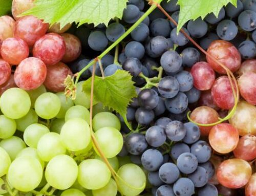 Types of grapes (I): what are the most famous varieties worldwide?