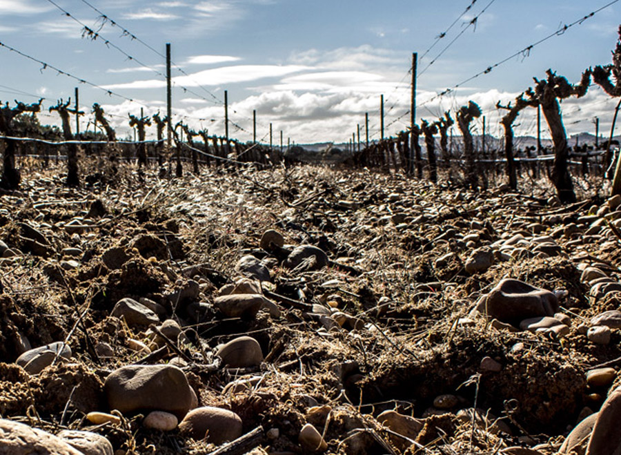 Barcolobo - Sustainable Viticulture