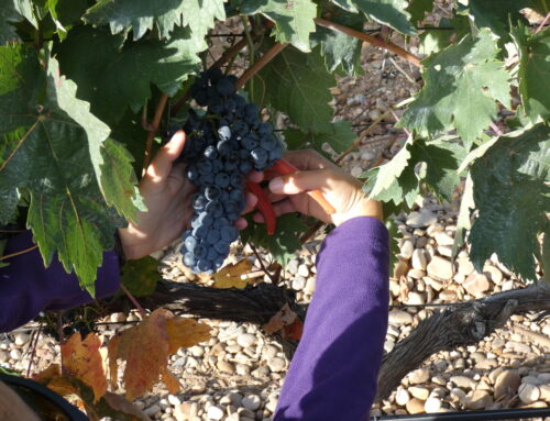 Harvest (I): What it is and when it occurs